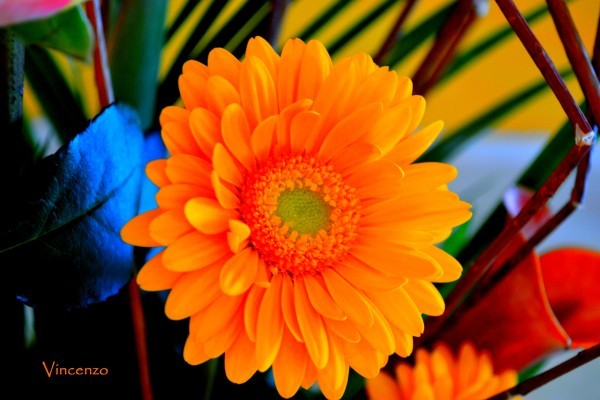 Fleur attitude