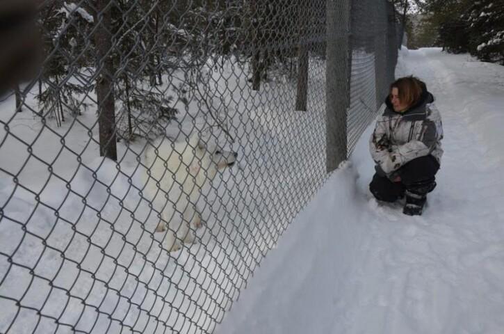 Nature en Images 3:  Dormir au pays des loups