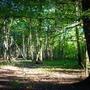 Lumière sur le sol de la forêt