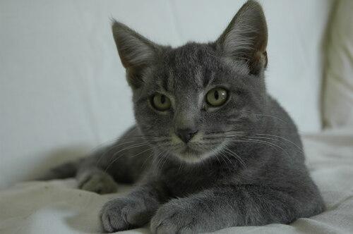 Le chat du blog