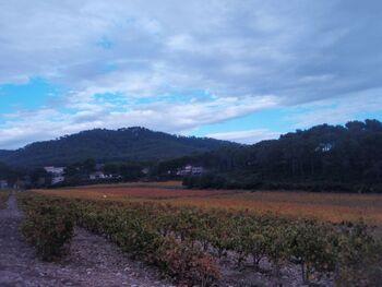 Les vignes d'automne