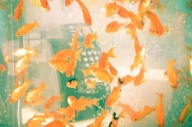 Fish-Tank-Phone10-640x425-1.jpg