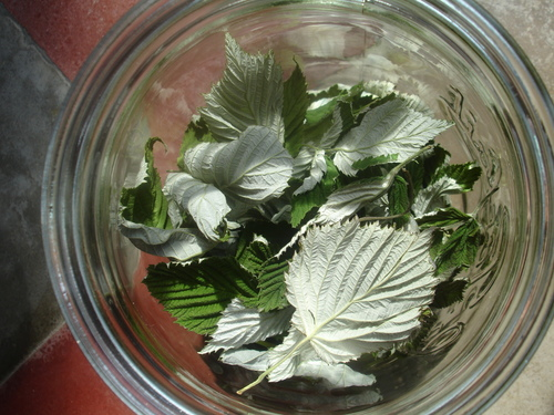 7 juin '14 - Mes fleurs séchées pour mes futures tisanes