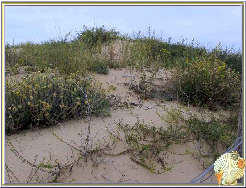 Une balade sur la plage de Boyard
