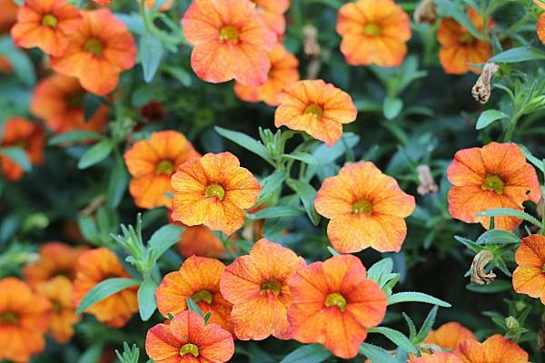 roses-et-papillon-016.JPG