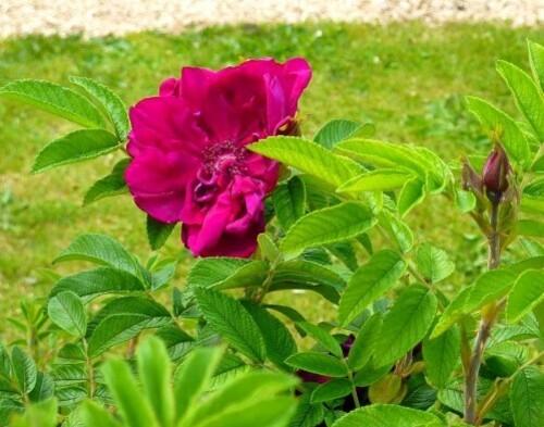 Phenomene-rouge-juin-2010005.jpg