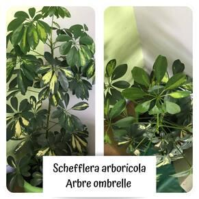 Les plantes en classe
