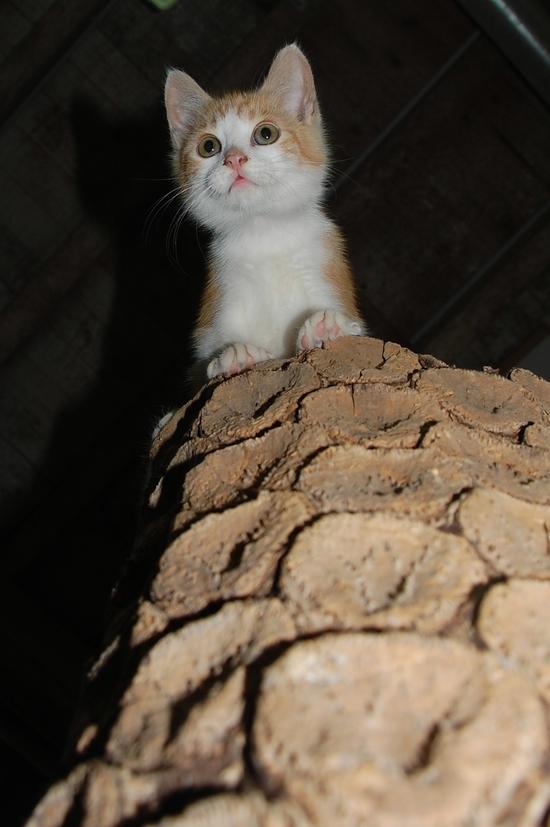 chaton09juilletl