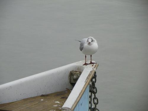 Lac d'Annecy et ses oiseaux