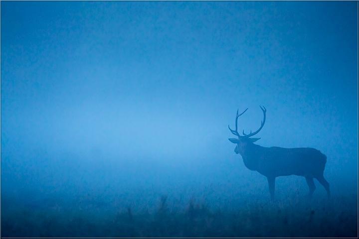 """Le film """"Les Saisons""""  et un clip vidéo  """" L'humain, un prédateur sans scrupule(s)"""
