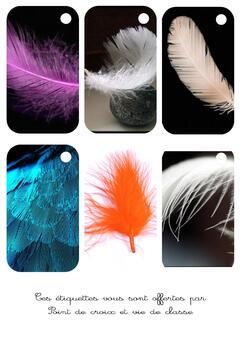 Cartonnettes plumes