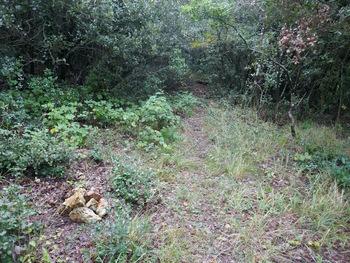 L'entrée du sentier (le cairn vient juste d'être monté)