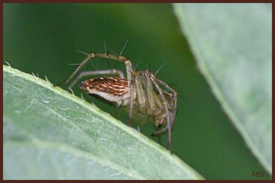 Arachnides-03-5428.jpg