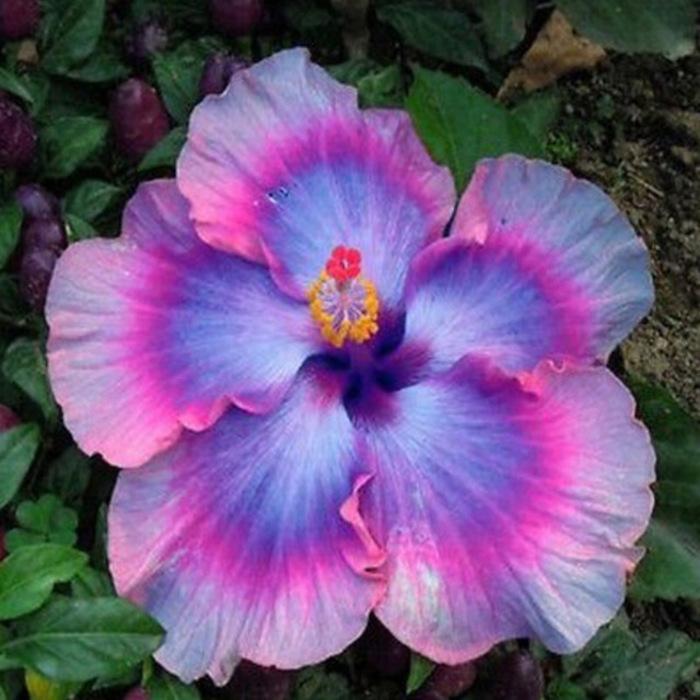 De Très Belles Images De Fleurs...  Agrémentées De Proverbes & De Pensées...  Qui Portent À Réfléchir...
