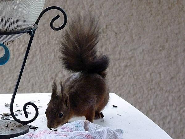 Ecureuils serviette