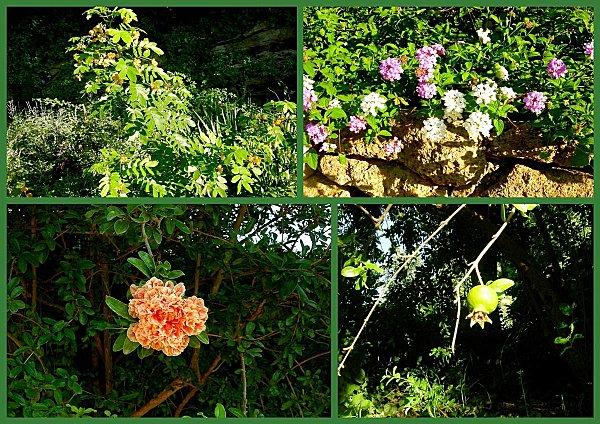 Le vieil Istres et le jardin ste Catherine3