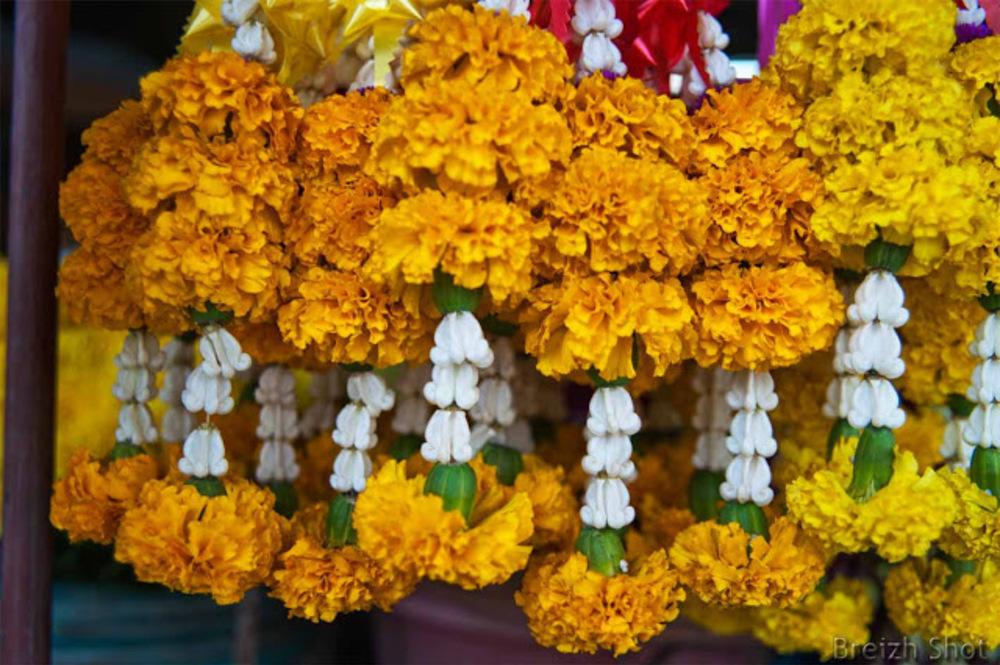Fleurs Bouddha - marché de Sukhothai