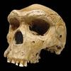Kabwe_skull_or_Broken_Hill_Skull__Replica__4