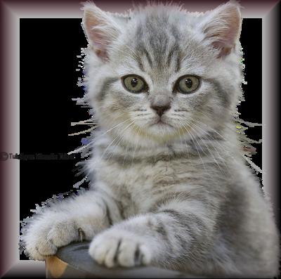 Tube chats - chatons 2975