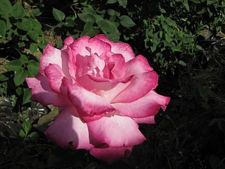 fleurs 1166