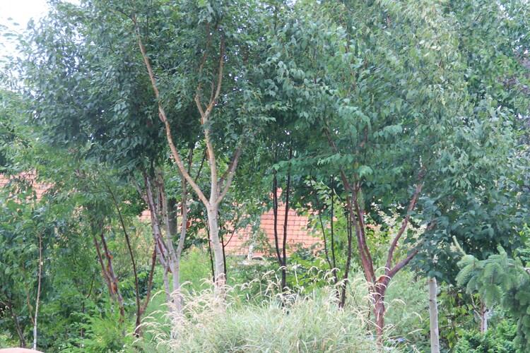 Reflet Jardin