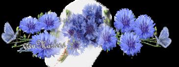 ♥ Le bleuet ♥