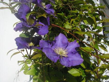 Fleurs_du_jardin_025