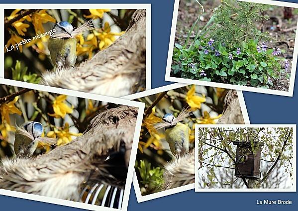 1-2012-04-13-oiseaux-du-ciel1.jpg