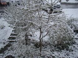 il neige encore