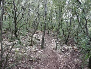 Au milieu de l'oppidum