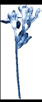 *** Douceur bleue ***