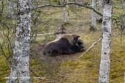 Polar Zoo-