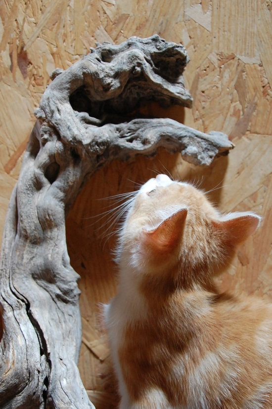 chaton19juilletf