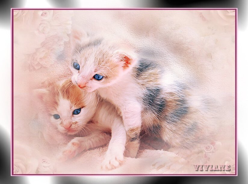 Chat et chatons