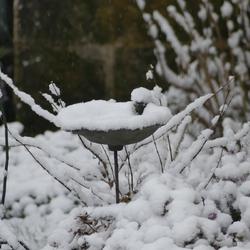 Dernières images de neige...