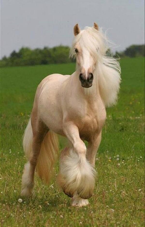 """La liberté n'a pas de prix """"Les chevaux"""""""