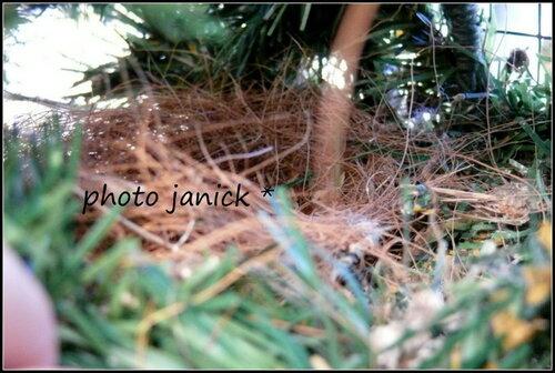 des nids....