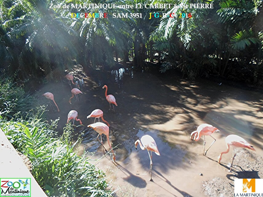 ZOO de MARTINIQUE 2/5 - 12/15  LE CARBET  972      D  15/01/2018