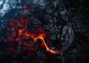 Dragonnet_302.png