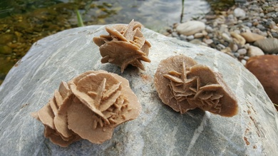 """Résultat de recherche d'images pour """"rose sur le sable"""""""