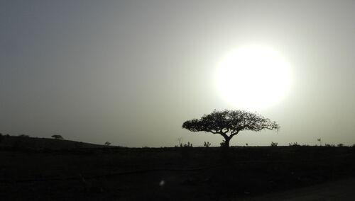 Oman mars 15 (12ème partie)
