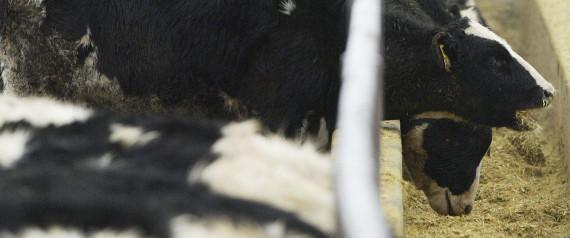 Vache folle, 17 ans de perdus, toujours des responsables mais toujours pas de coupables.