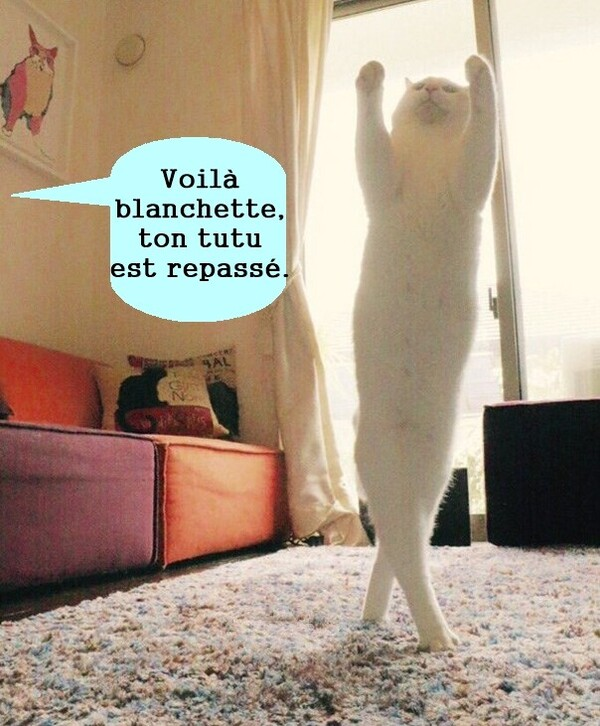 Le petit chat de l'opéra