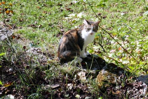 Le chat d'un voisin !