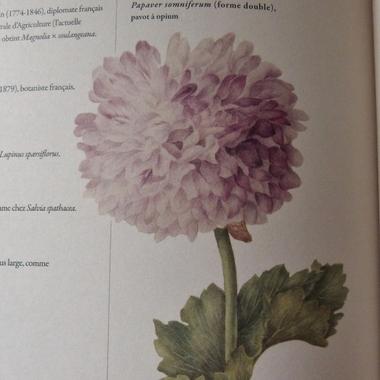 Le Latin du Jardinier...
