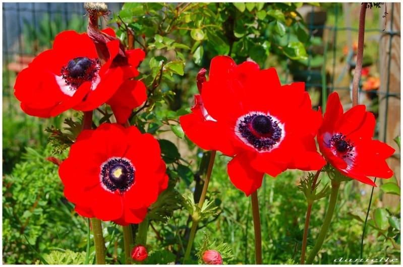 photos-fleurs 1061