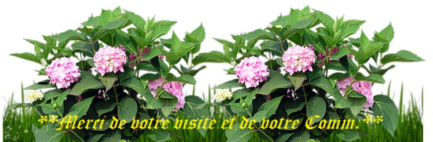 LE 09 SEPTEMBRE >>>LES FLEURS SEChEES