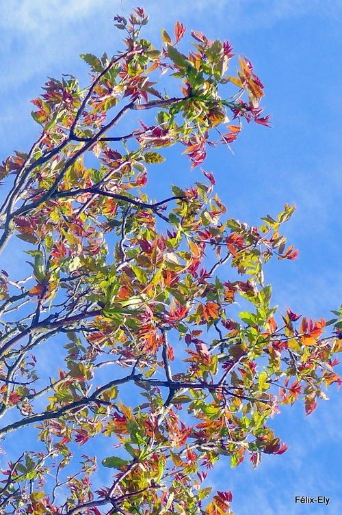 Belles feuilles du printemps