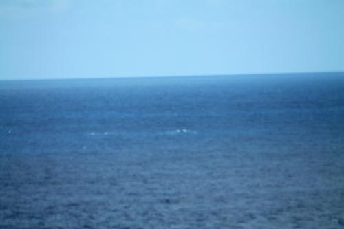 A défaut de baleines des oiseaux à la Pointe des Châteaux