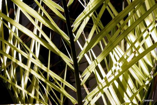 Palmes et lumière